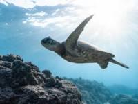"""Seminar on """"Tiered Preparedness for Wildlife Response in the Mediterranean Region"""""""